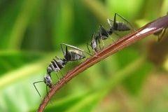 Aleja a los insectos de tu jardín y tu huerto