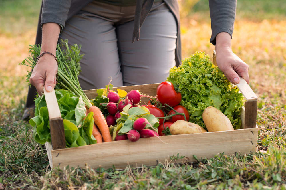 Aprovecha tu jardín para hacer unos fáciles cultivos de frutas y verduras
