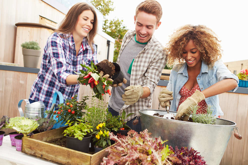 Las ventajas de poner un huerto en tu vida