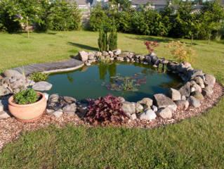 Reformando el jardín