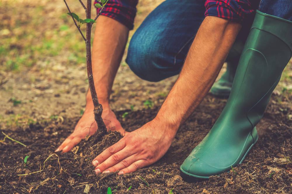 El cuidado de tus plantas, remedio contra la depresión