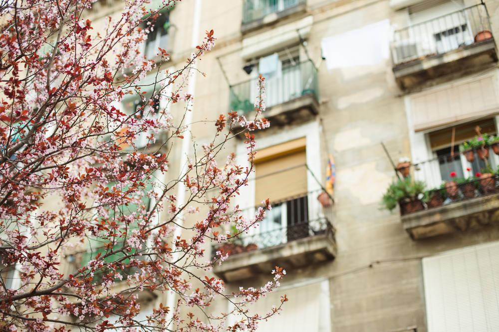 Flores y plantas para disfrutar de Barcelona