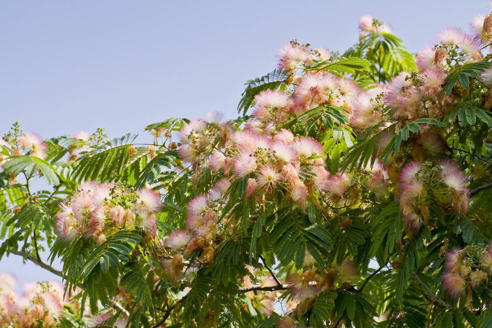Los Mejores Árboles para Jardines Pequeños