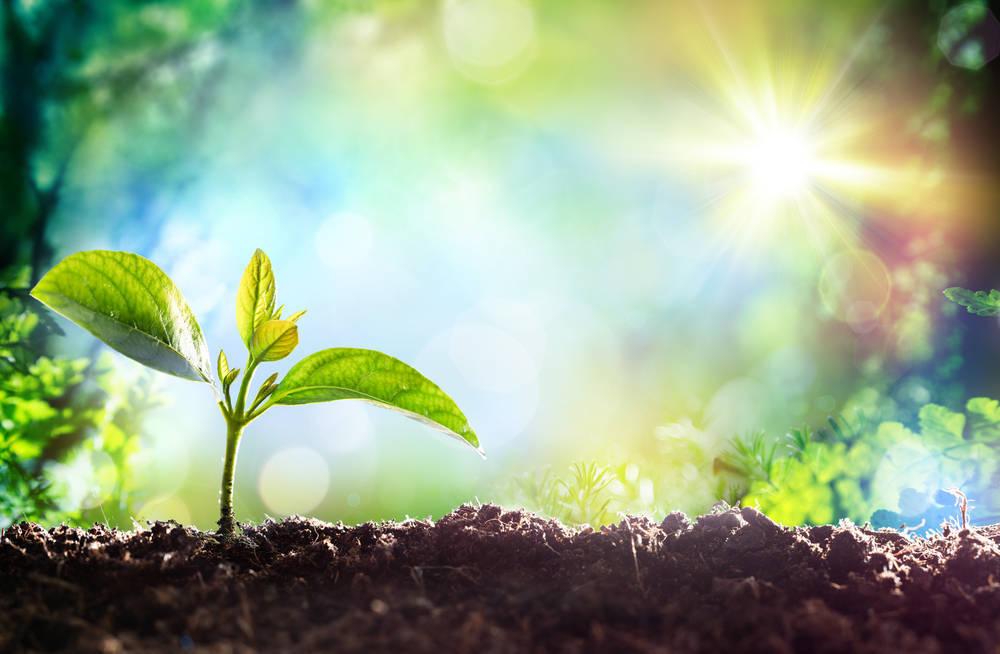 La luz no siempre es buena para las plantas