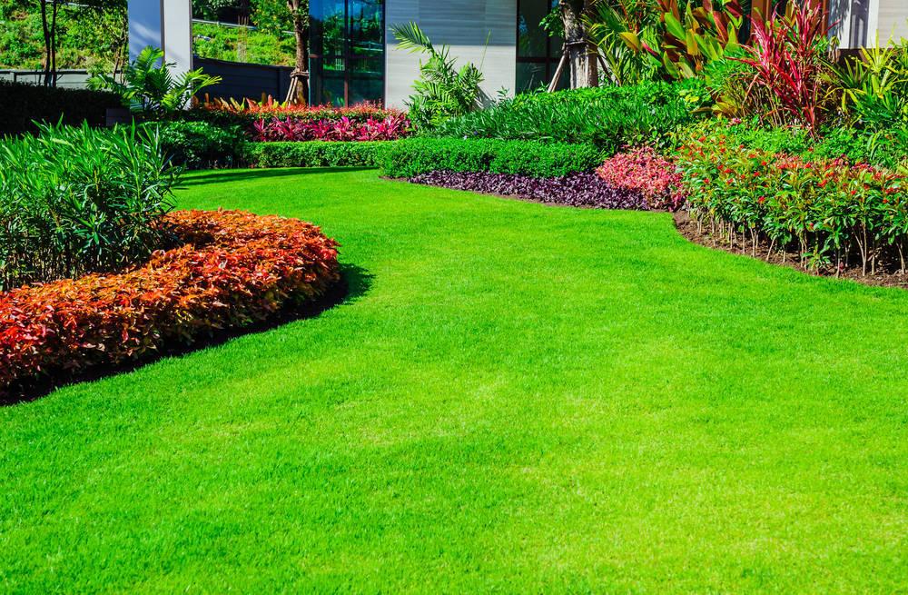 Los cuidados más indispensables para que tu jardín luzca como el primer día